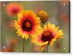Wildflowers Acrylic Print by Darryl Wilkinson