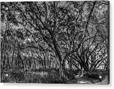 Wind Swept Trees Acrylic Print
