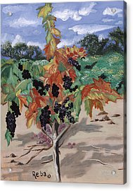 Wine Country Acrylic Print by Reba Baptist