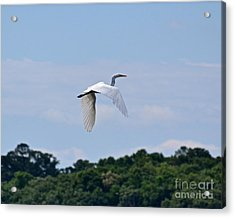 Acrylic Print featuring the photograph Wings II by Carol  Bradley