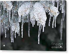 Winter Branches In Ice Acrylic Print by Elena Elisseeva