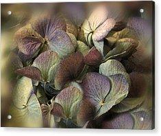 Winter Hydrangea Acrylic Print by Jessica Jenney