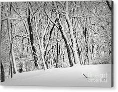 Winter Park Landscape Acrylic Print by Elena Elisseeva