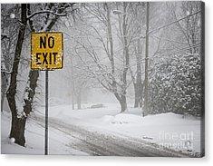 Winter Road During Snowfall Iv Acrylic Print by Elena Elisseeva