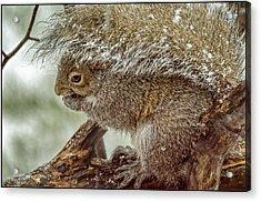 Winter Squirrel Acrylic Print by LeeAnn McLaneGoetz McLaneGoetzStudioLLCcom