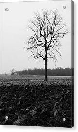 Winter Tree Acrylic Print by Daniel Kasztelan