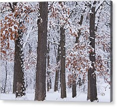 Winter Trees Acrylic Print by Larry Bohlin