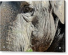Wise One,elephant  Acrylic Print