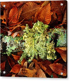 Wolf Moss Lichen Acrylic Print by Frank Winters