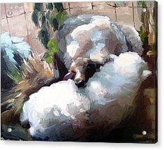 Wool Pillow Acrylic Print