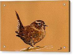 Wren Bird Acrylic Print