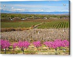 Yakima Valley Spring Acrylic Print