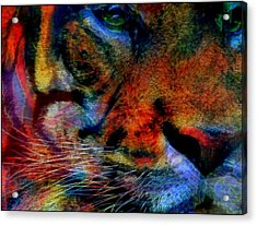 Year Of The Tiger Acrylic Print