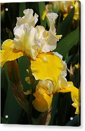 Yellow Delight Acrylic Print by Bruce Bley