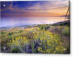 Yellow Flowers At The Sea Acrylic Print by Guido Montanes Castillo