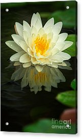 Yellow Lotus Acrylic Print
