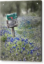 You've Got Mail Acrylic Print by David and Carol Kelly