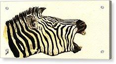 Zebra Head Study Acrylic Print