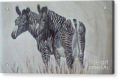 Zebras Acrylic Print by Audrey Van Tassell