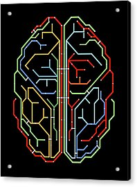 Brain Acrylic Print by Alfred Pasieka
