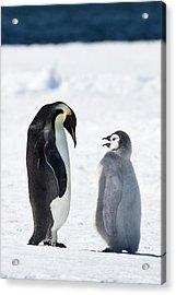 Cape Washington, Antarctica Acrylic Print by Janet Muir
