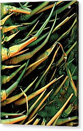 Cucumber Leaf Trichomes Acrylic Print by Stefan Diller