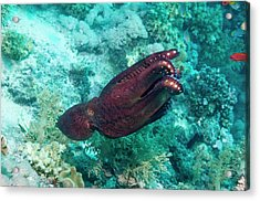 Day Octopus Acrylic Print by Georgette Douwma