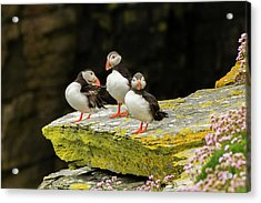 Europe, Scotland, Shetland Islands Acrylic Print by Jaynes Gallery