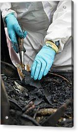 Forensics Training Acrylic Print by Jim Varney/science Photo Library