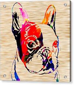 French Bulldog Acrylic Print