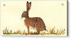 Hare Acrylic Print