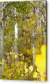 Sierra Autumn Acrylic Print by ELITE IMAGE photography By Chad McDermott