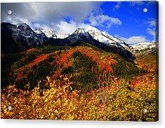 Fall Acrylic Print by Mark Smith