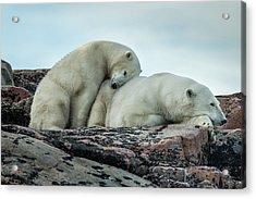 Canada, Nunavut Territory, Repulse Bay Acrylic Print