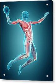 Handball Player Acrylic Print by Sebastian Kaulitzki/science Photo Library