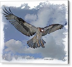 Osprey Flight Acrylic Print by Larry Linton