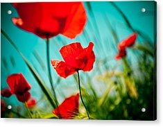 Poppy Field And Sky Acrylic Print