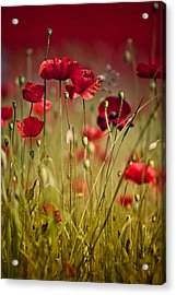 Summer Poppy Acrylic Print by Nailia Schwarz