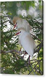 Usa, Florida, St Acrylic Print by Jaynes Gallery