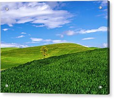 Usa, Washington State, Palouse Country Acrylic Print