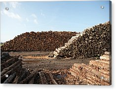 Wood Chip Fuel Production Acrylic Print by Lewis Houghton/science Photo Library