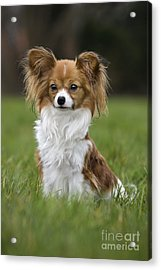 110506p146 Acrylic Print by Arterra Picture Library