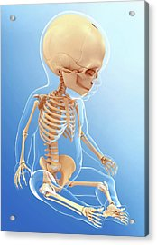 Baby's Skeletal System Acrylic Print by Pixologicstudio