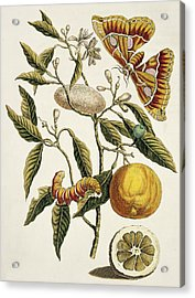 Insects Of Surinam Acrylic Print by Natural History Museum, London/science Photo Library
