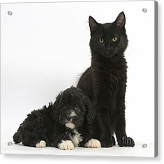 Kitten And Puppy Acrylic Print by Mark Taylor