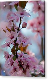 Plum Tree Flowers Acrylic Print