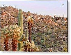 Usa, Arizona, Tucson Acrylic Print by Jaynes Gallery