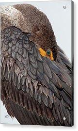 Usa, Florida, Everglades National Park Acrylic Print