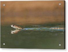 Usa, Texas, Rio Grande Valley Acrylic Print by Jaynes Gallery