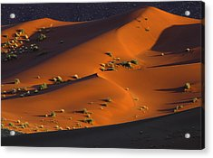 120118p071 Acrylic Print by Arterra Picture Library